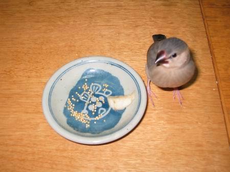 まろ@食事の練習3/061024.JPG