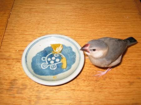 まろとデザート(柿、みかん)2/061026.JPG