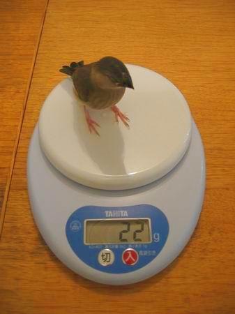 まろの体重測定3/061015.JPG