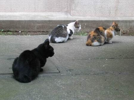 豊玉浴場(練馬区)周辺/猫三匹/060917.JPG
